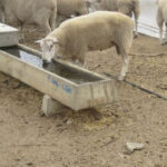 concrete stock troughs for sheep