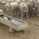 concrete stock troughs for livestock