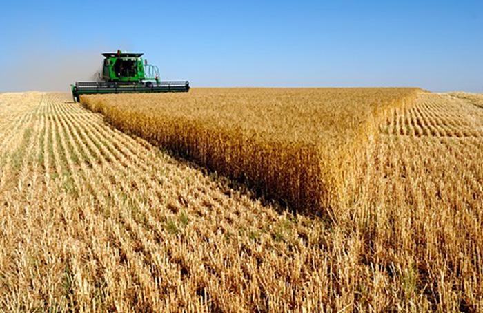 Wheat_Fields_Wallpapers_laba.ws