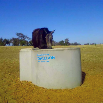 horse drinking water in concrete water trough