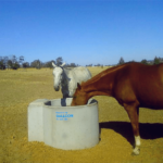 Two horses drinking water in water trough